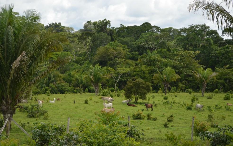 Pecuaristas desmatam a Reserva Chico Mendes para criação de gado — Foto: Yuri Marcel/G1