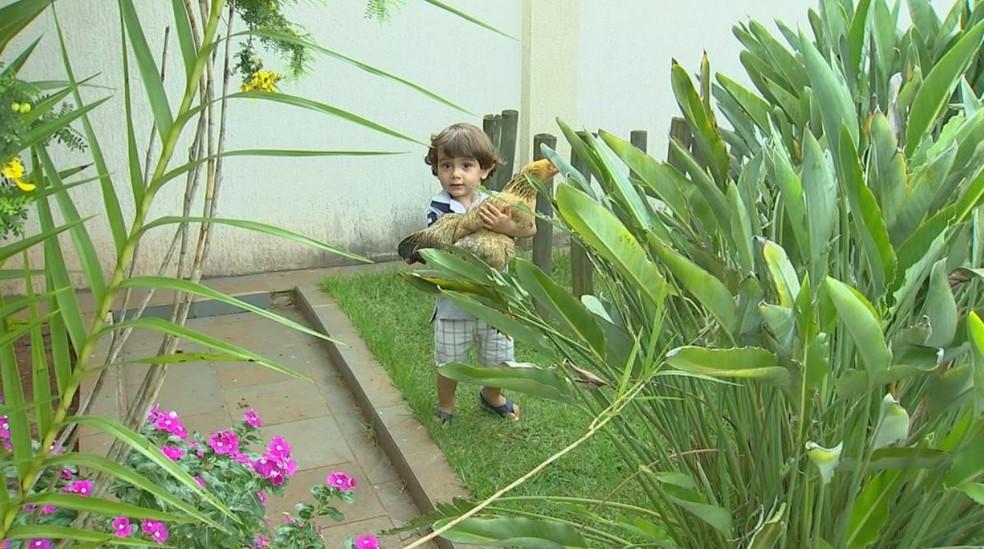 Pequeno Arthur, de 2 anos, considera Tatá uma companheira e brinca com a galinha todos os dias (Foto: Reprodução/TV TEM)
