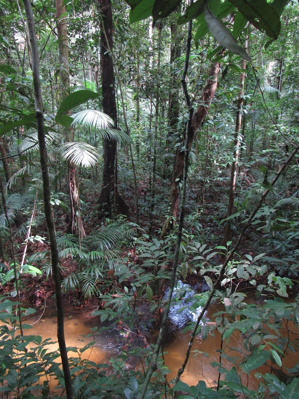 Floresta na área de ocorrência de sagui descoberto é uma das mais desmatadas — Foto: Rodrigo Araújo/ Arquivo Pessoal