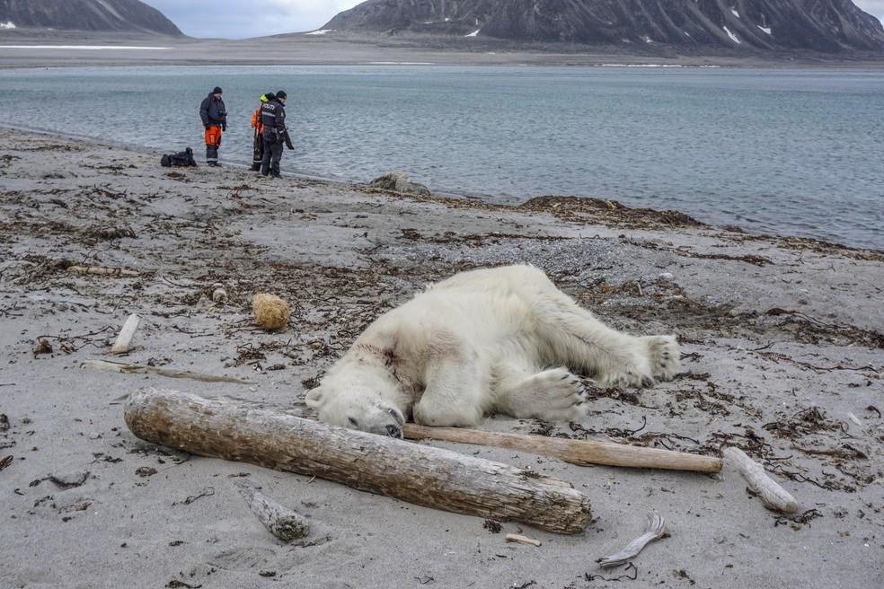 Urso polar é abatido após atacar e ferir membro do navio MS Bremen (Foto: Gustav Busch ARNTSEN / NTB Scanpix / AFP)