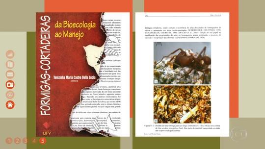 Saiba como controlar o ataque de formigas na plantação