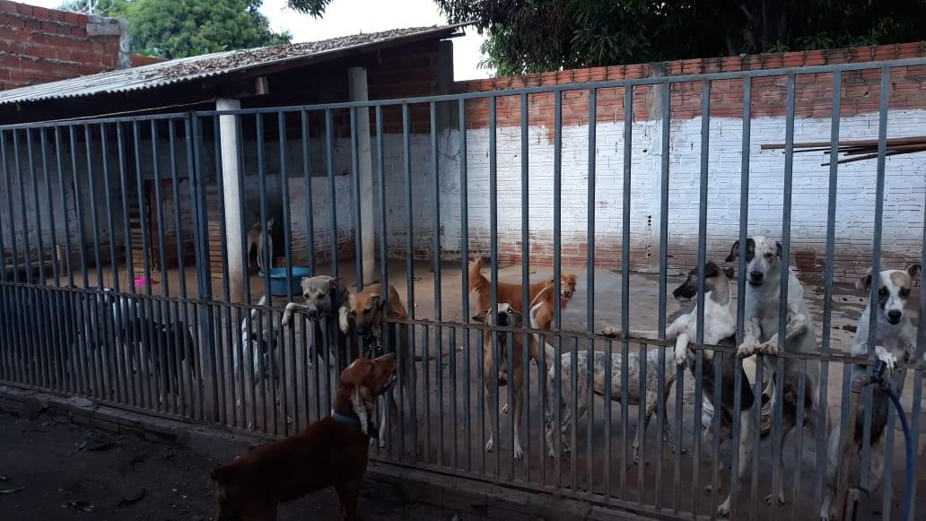 Abrigo de cães em Timon passa por dificuldades e grupo pede ajuda para animais conseguirem um lar