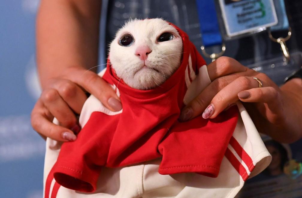-  O gato Achilles, que mora no Museu Hermitage em São Petersburgo, é vestido com uma camisa de futebol antes de ser colocado como   39;gato vidente  39