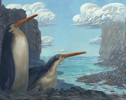 Fóssil achado por crianças na Nova Zelândia é de pinguim gigante extinto
