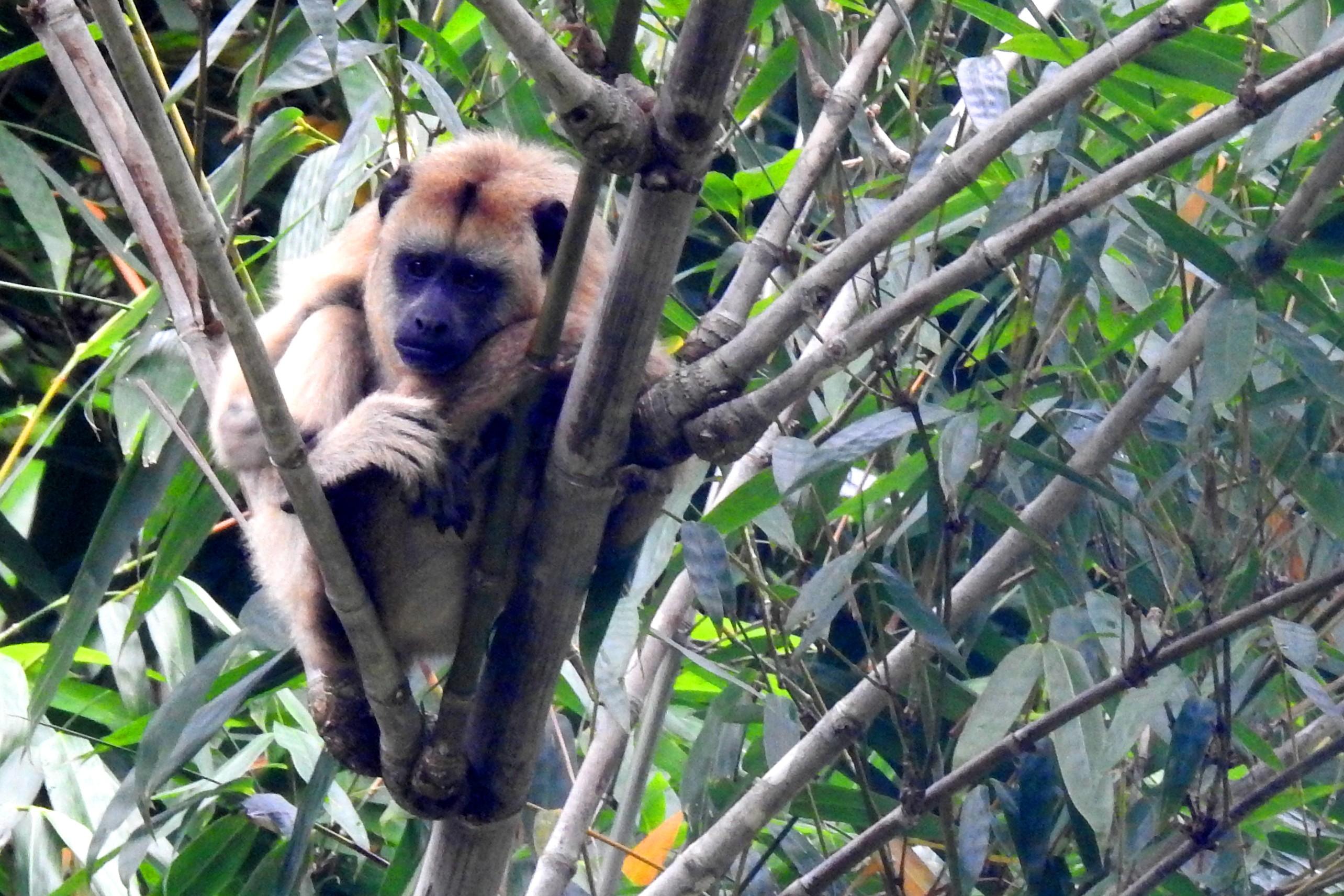 A natureza na universidade: professor de medicina revela fauna do campus da USP Ribeirão