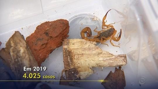 Rio Preto registra mais de 90 picadas de escorpião neste ano