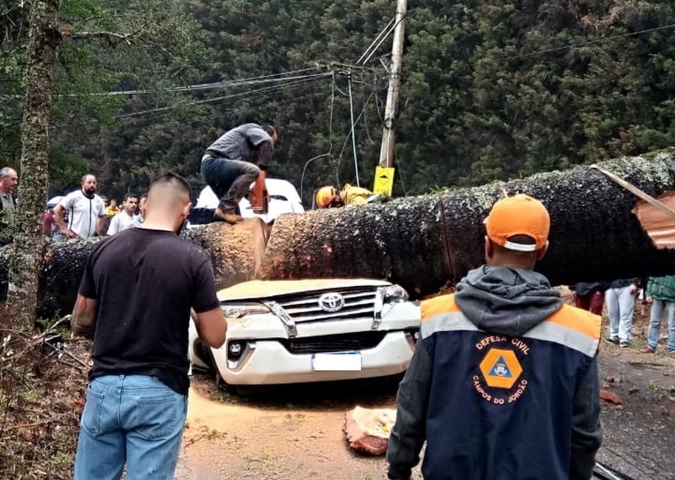 Árvore tomba em cima de carro e mata uma pessoa em Campos do Jordão — Foto: Defesa Civil/Divulgação