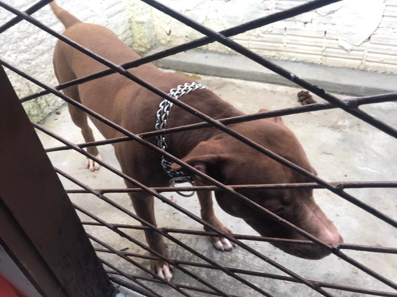 Cachorro ataca a própria dona e mais 3 pessoas na Zona Oeste de Natal