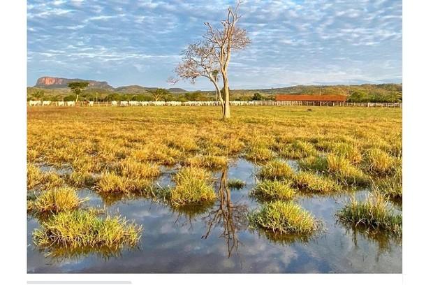 Raízes do Pantanal Sul Matogrossense registradas pelo ator (Foto: Reprodução)