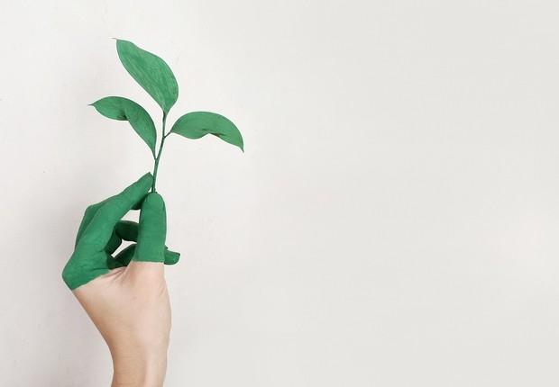 Sustentabilidade; consumo consciente; meio ambiente (Foto: Pexels)