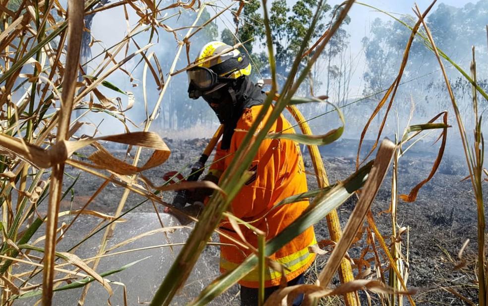 Bombeiro combate fogo em mata seca na L4 Sul, em Brasília (Foto: Corpo de Bombeiros do DF/Divulgação)