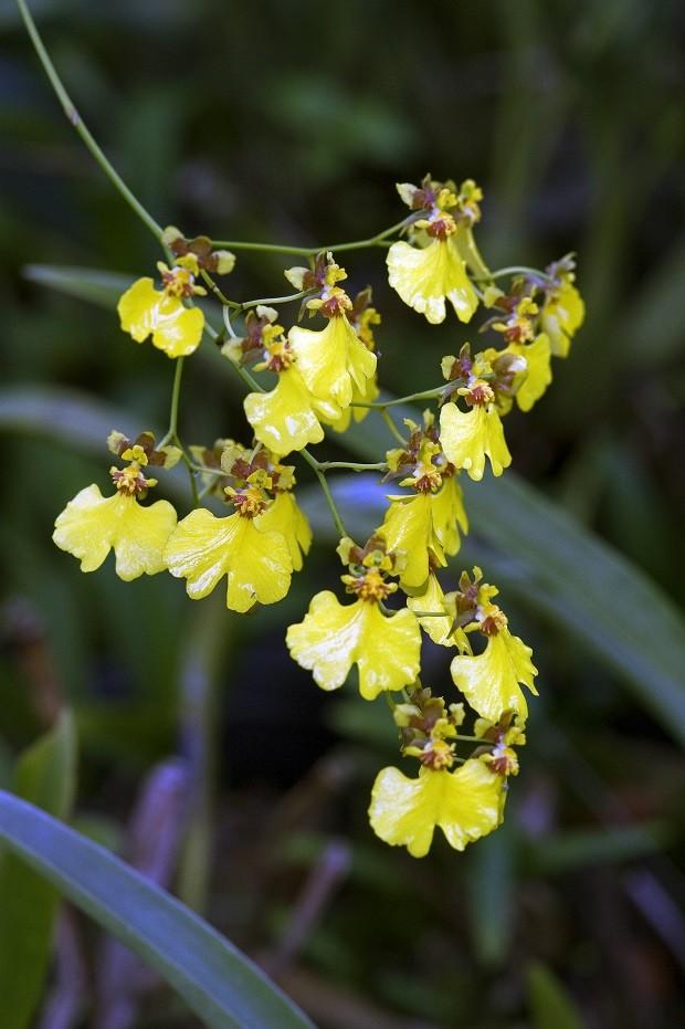 8 tipos de orquídeas que você precisa conhecer (Foto: ThinkStock)