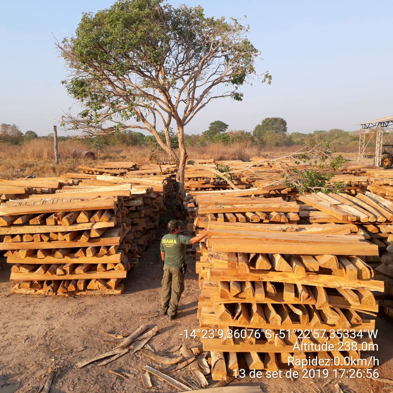 Ibama apreende madeira ilegal e aplica R$ 4,7 milhões em multas em 20 fazendas em MT - Notícias - Plantão Diário