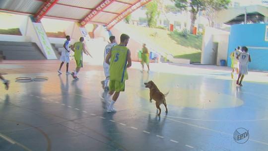 Equipe de basquete de São João da Boa Vista, SP, tem mascote especial