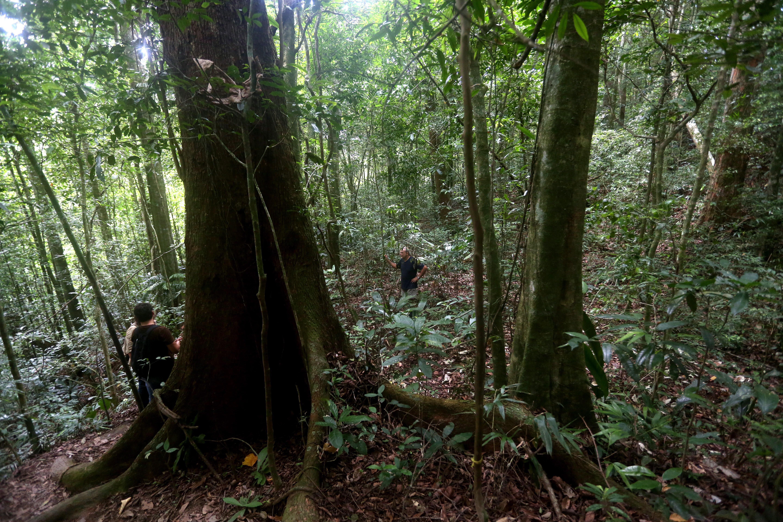 Organizações são contra intenção de Bolsonaro de explorar a Mata Atlântica