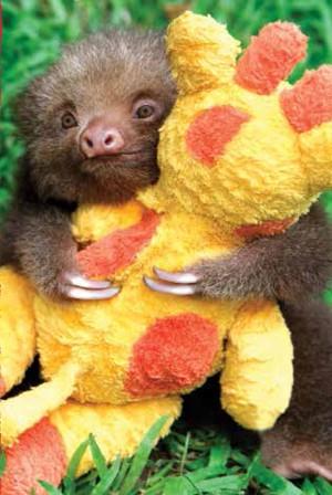 Mateus foi fotografado enquanto abraçava ursinho de pelúcia (Fot Lucy Cook/Editora Nossa Cultura/Divulgação)