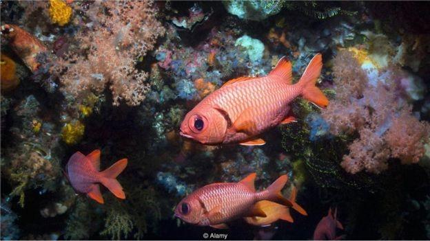 Com poucos estudos concluídos, temos muito pouca compreensão dos potenciais custos ambientais da mineração de fontes hidrotermais em águas profundas (Foto: JANE GOULD / ALAMY STOCK PHOTO via BBC News Brasil)