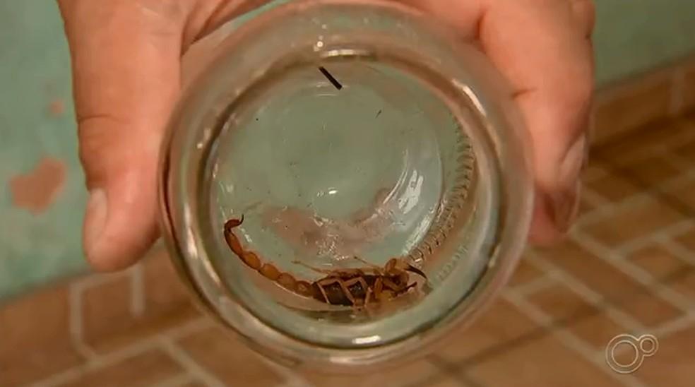 Moradores encontram escorpiões dentro das casas em Sorocaba  — Foto: Reprodução/TV TEM