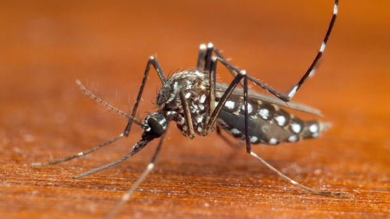 Baixada Santista soma 9.152 casos de dengue e 6.475 de chikungunya em 2021; registros apresentam queda