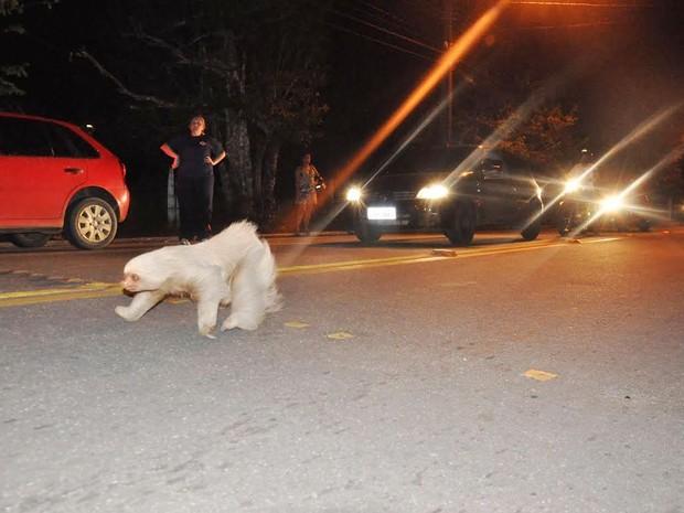 Preguiça se arrisca para atravessar rua em Cruzeiro do Sul (Fot Vanísia Nery/G1)