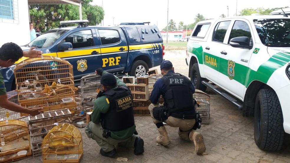 Ação conjunta entre PRF e Ibama resultou na apreensão de aves e prisão de 11 pessoas em Macaíba. (Foto: PRF/Divulgação)