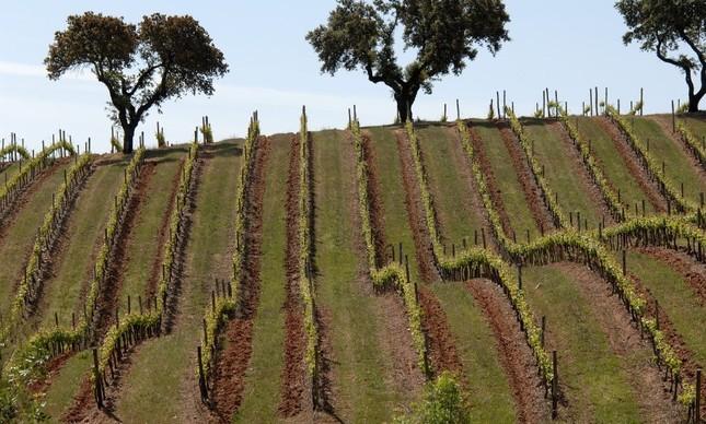 Casa Relvas: vinícola do Alentejo com foco na tradição e na sustentabilidade