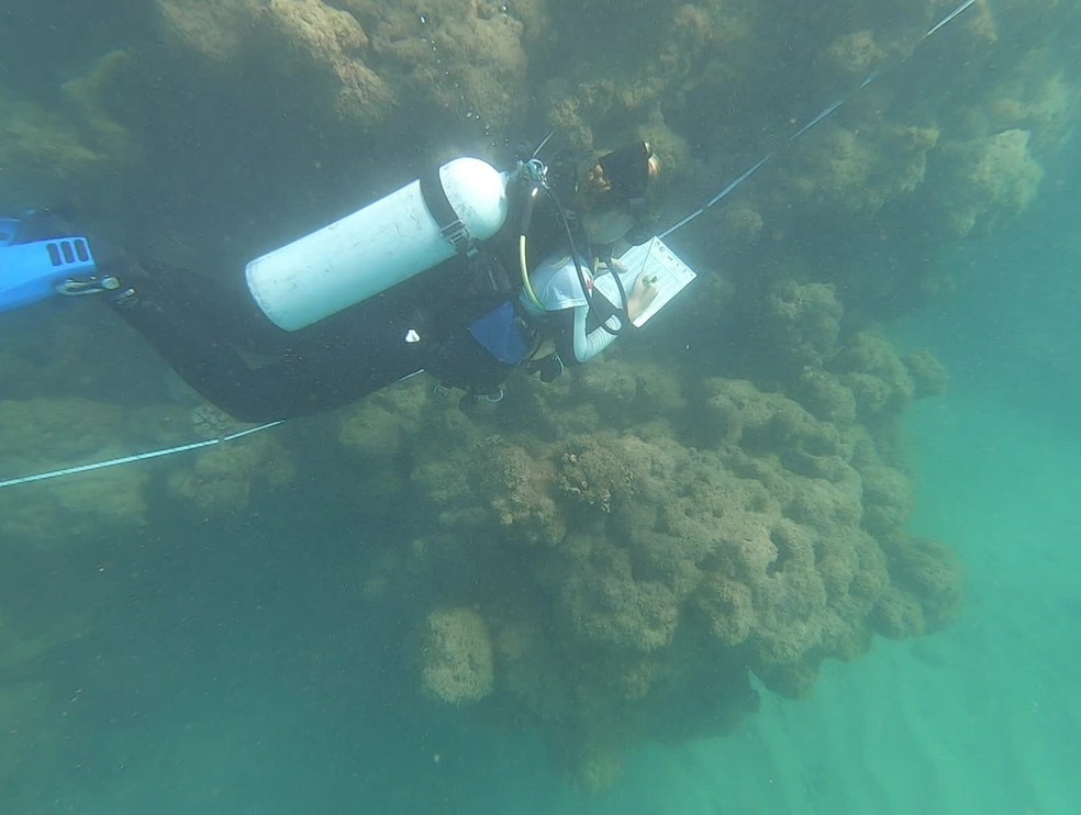 Mergulhador fazendo monitoramento nos recifes de corais de Tamandaré, no dia 24 de outubro de 2019, após chegada de óleo no litoral pernambucano — Foto: TV Globo/Reprodução