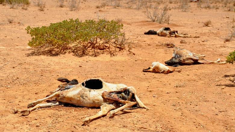 seca-sustentabilidade-mudança-climatica-pecuaria-aquecimento-global (Foto: Oxfam East Africa/CCommons)