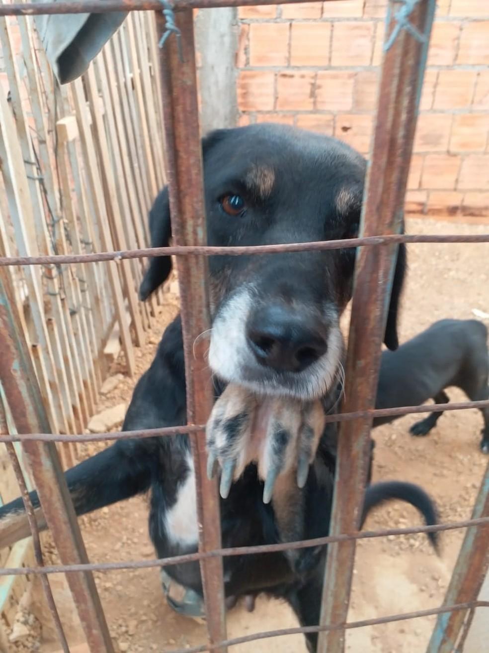 Animais foram vítimas de maus-tratos em Primavera do Leste — Foto: ONG SOS Animais Primavera do Leste
