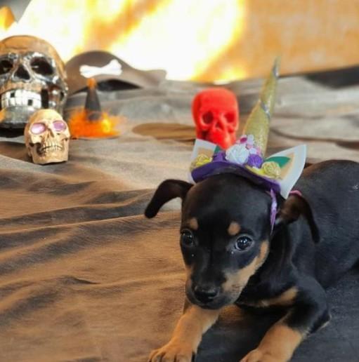 Gostosuras ou travessuras? CCZ faz ensaio fotográfico de halloween com cães e gatos para estimular adoção