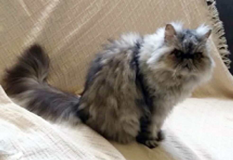 Animal da raça persa foi estimado em R$ 1 mil no leilão, mas não foi arrematado (Foto: Divulgação/JFPB)