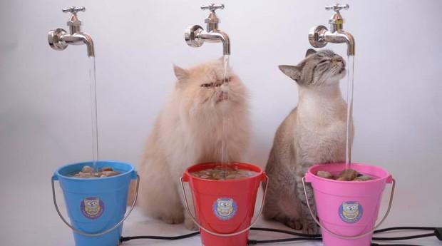 Bebedouro criado pela CatMyPet (Foto: Divulgação)