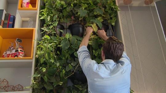 Paisagista mostra opções de jardins verticais para sua casa