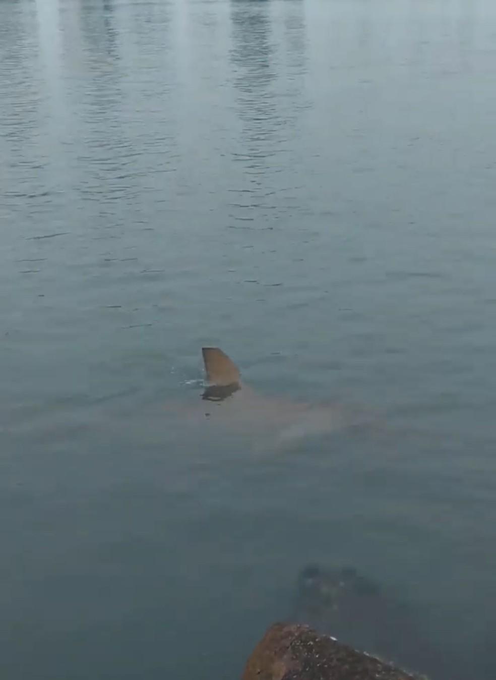 Tubarão foi visto em área central de Balneário Camboriú (SC) — Foto: Redes Sociais/Reprodução