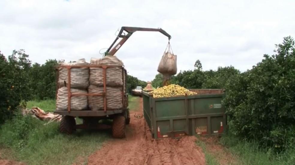 Exportações de suco de laranja caíram quase 40% em 2020 — Foto: RPC/Reprodução