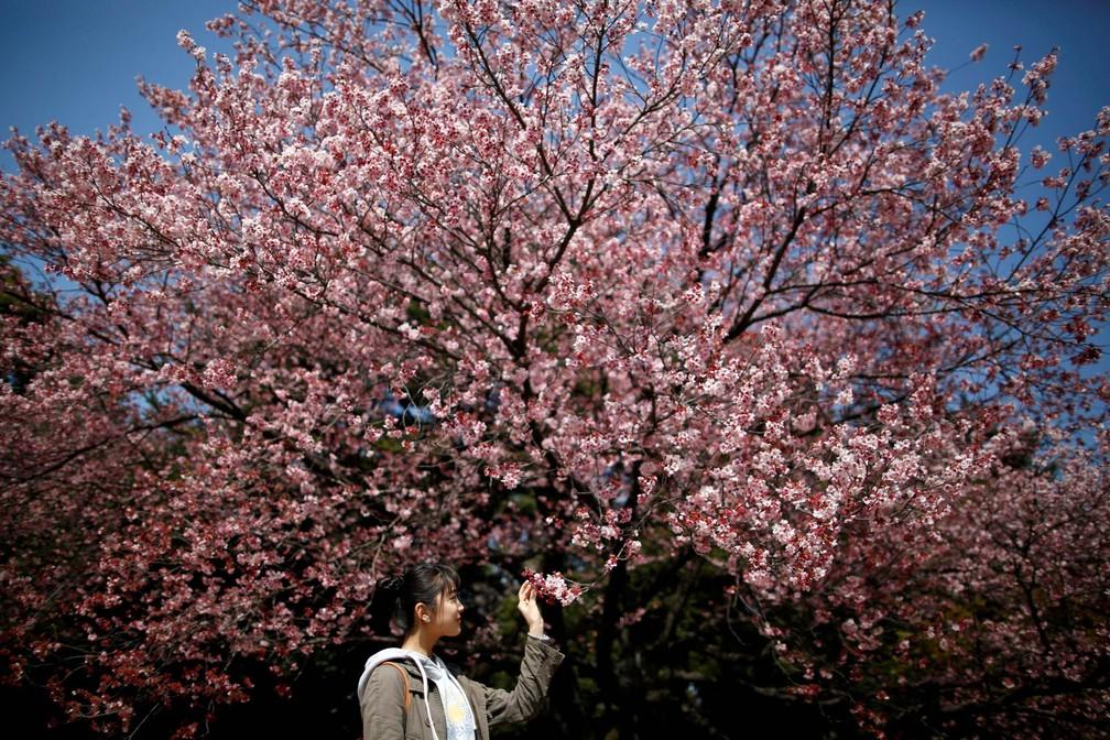 -  Jovem observa flores de uma cerejeira no Parque Nacional Shinjuku Gyoen, em Tóquio, no Japão  Foto: Issei Kato/Reuters