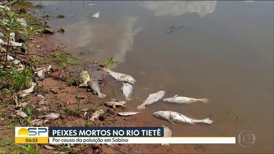 Prefeitura retira uma tonelada de peixes mortos do Rio Tietê em Sabino