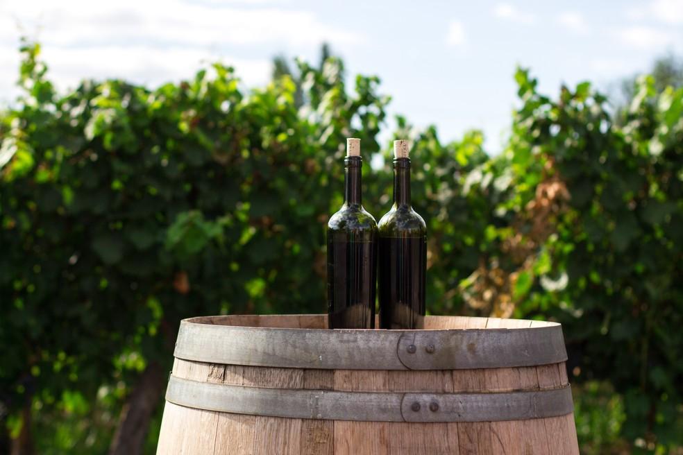 Você pode reaproveitar garrafas de vinho para fazer a água solarizada — Foto: Reprodução/Unsplash