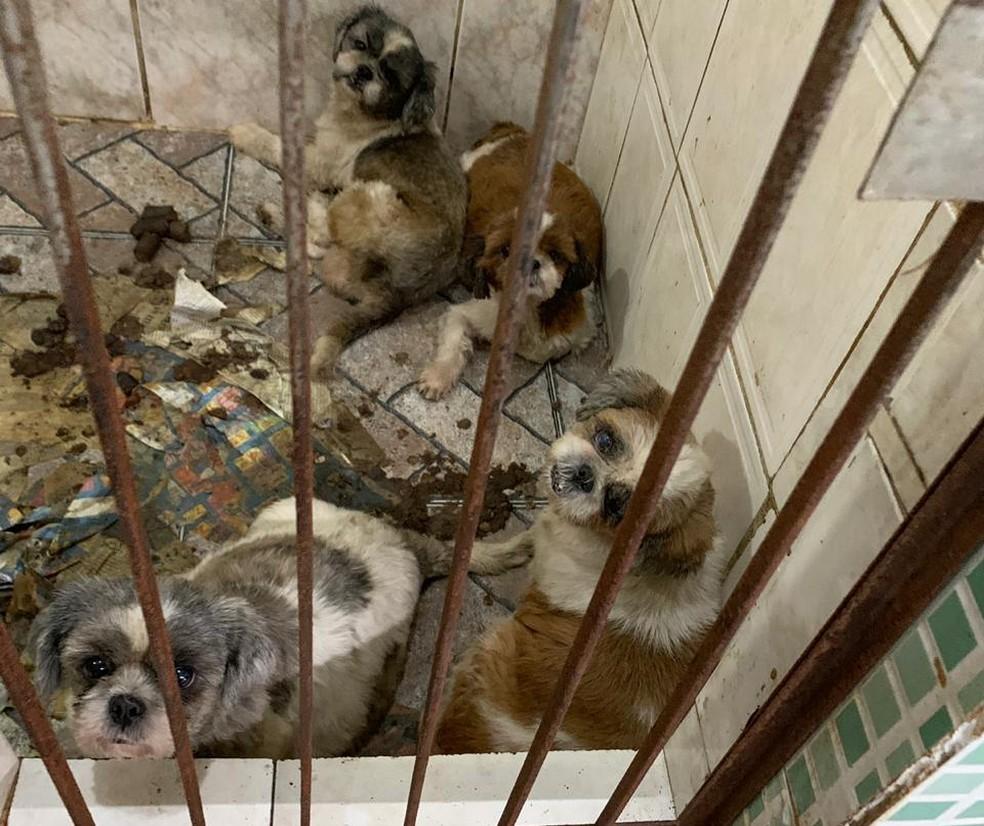 Animais em canil no Grajaú — Foto: OAB/RJ