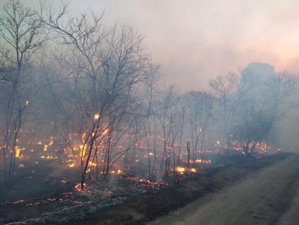 Fogo consome vegetação próxima à Área de Preservação Ambiental Pedra da Andorinha — Foto: Corpo de Bombeiros