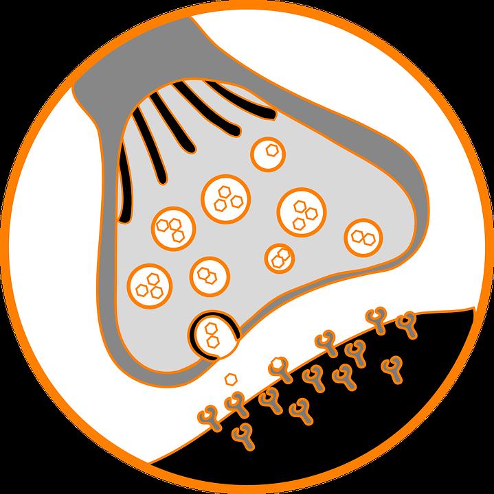 Representação de sinapse (Foto: Pixabay/Creative Commons)