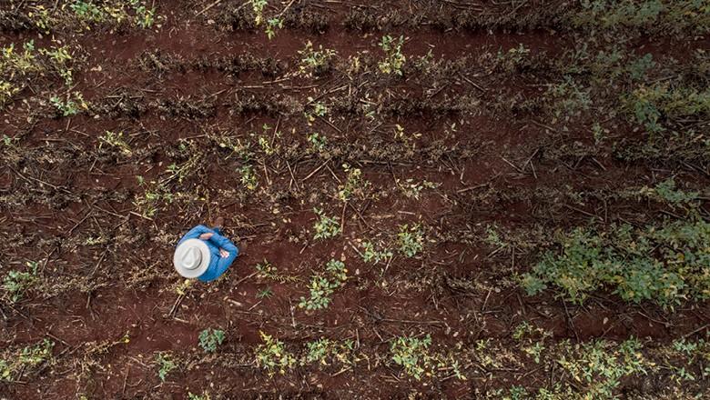 A seca e as altas  temperaturas provocaram perdas no Paraná, Mato Grosso do Sul e em Goiás. O clima frustrou  a safra recorde de soja (Foto: Sergio Ranalli)