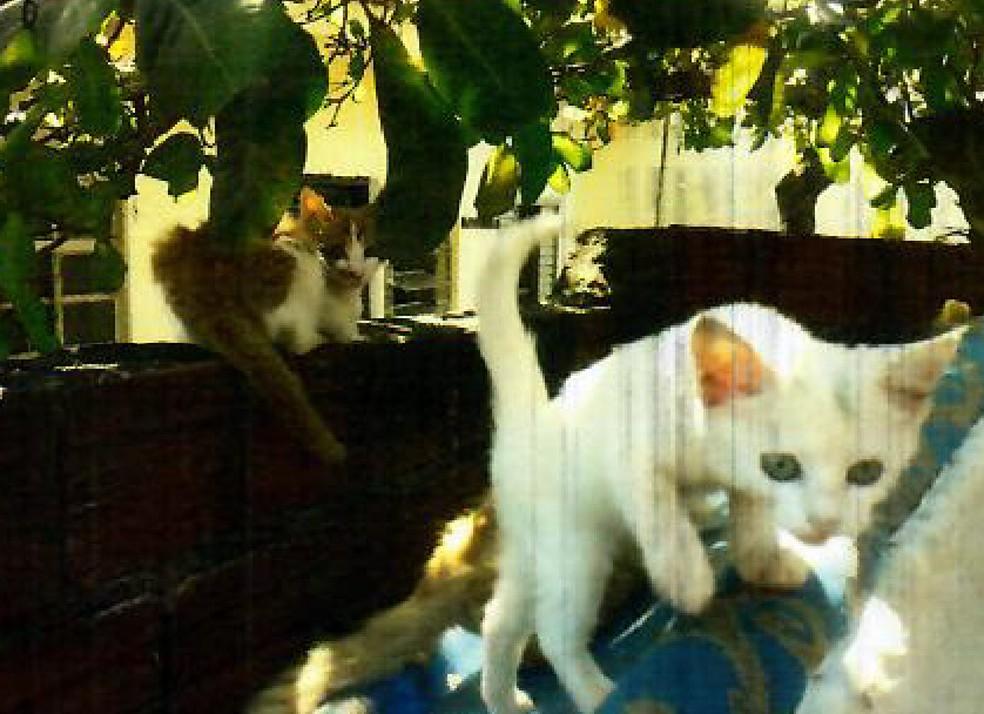 Gatos foram abandonados em casa de Maringá — Foto: Prefeitura de Maringá/Divulgação