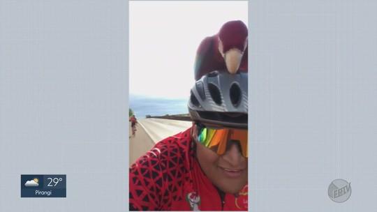 Arara-vermelha 'pega carona' com grupo de ciclistas em rodovia de Barrinha, SP; vídeo