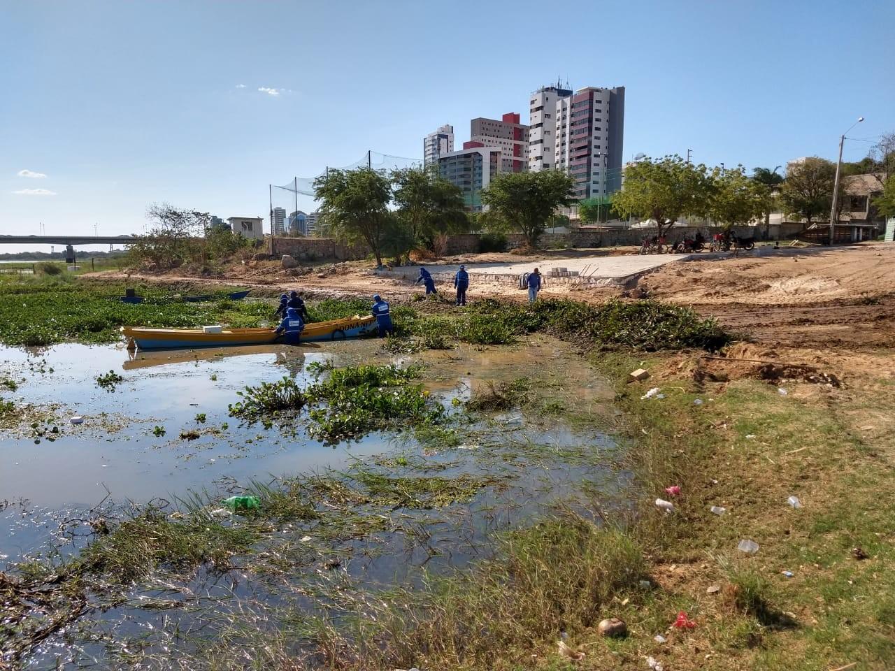 Equipe realiza mutirão para retirada de baronesas na orla de Petrolina - Notícias - Plantão Diário