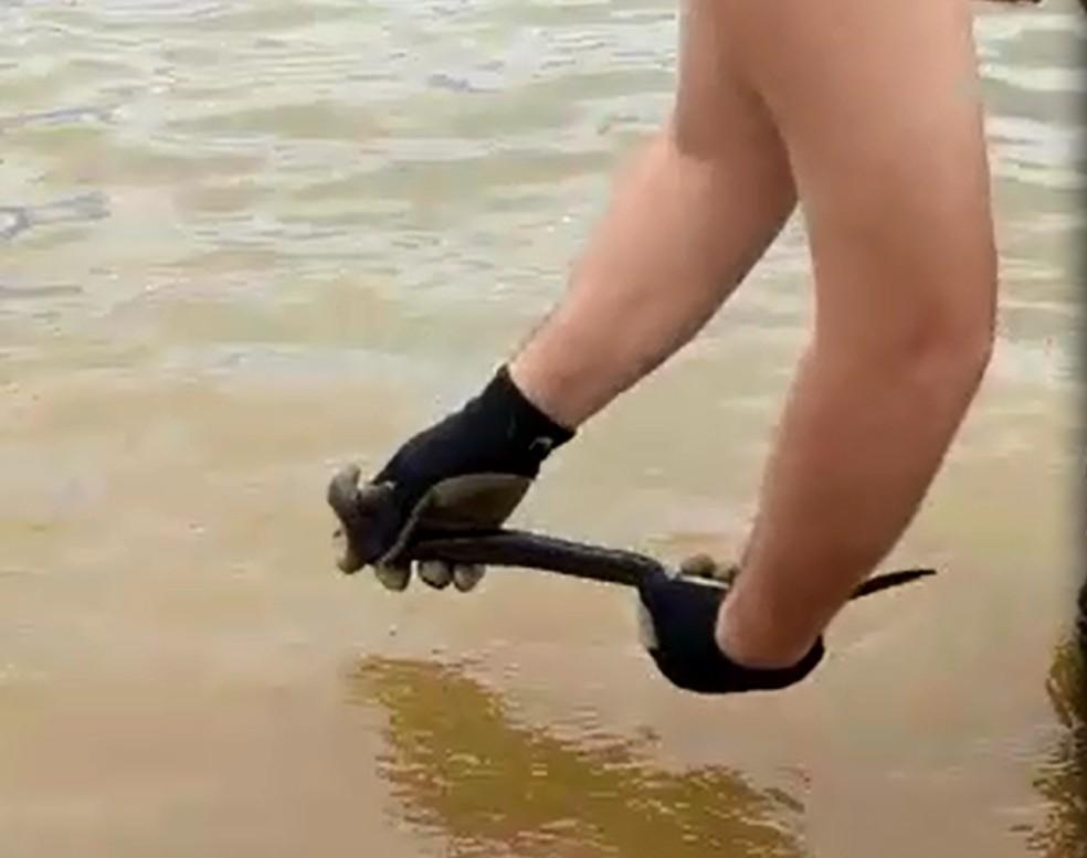 Enguia foi solta na água novamente após o resgate (Foto: Arquivo Pessoal)