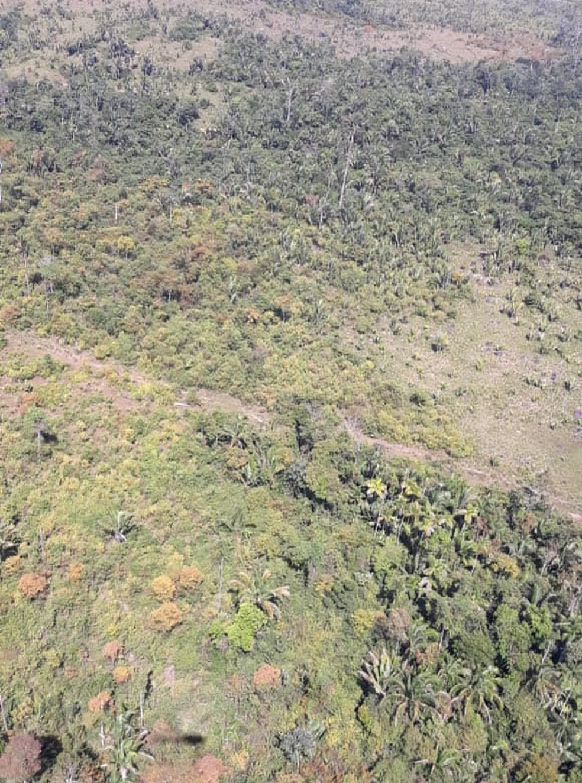 Vegetação ficou amarelada após pulverização de agrotóxicos — Foto: Ciopaer/Divulgação