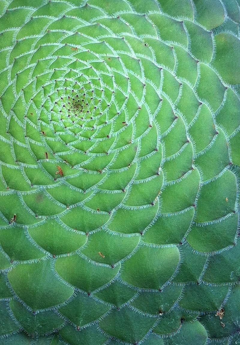 A proporção áurea está presente na natureza (Foto: Unspslash)