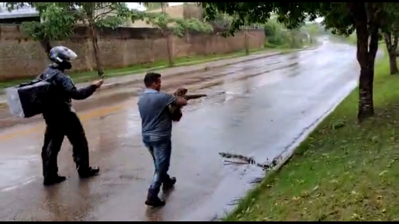 VÍDEO: Bicho-preguiça aparece em rua durante chuva e morador carrega animal até mata em RO