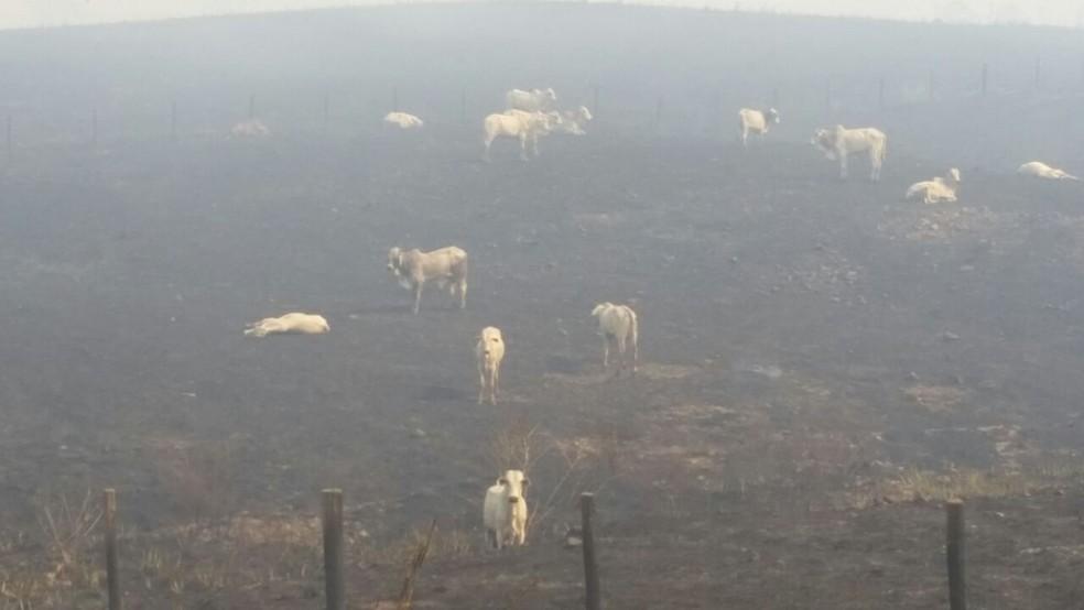 Polícia Militar informou que mais de 100 animais foram mortos (Foto: Divulgação)